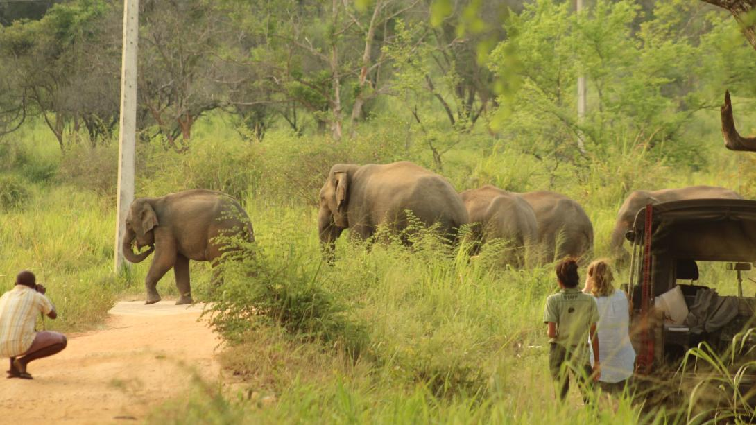 Volunteers track elephants in the national park in Sri Lanka.